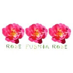 Rose Fushia Rose